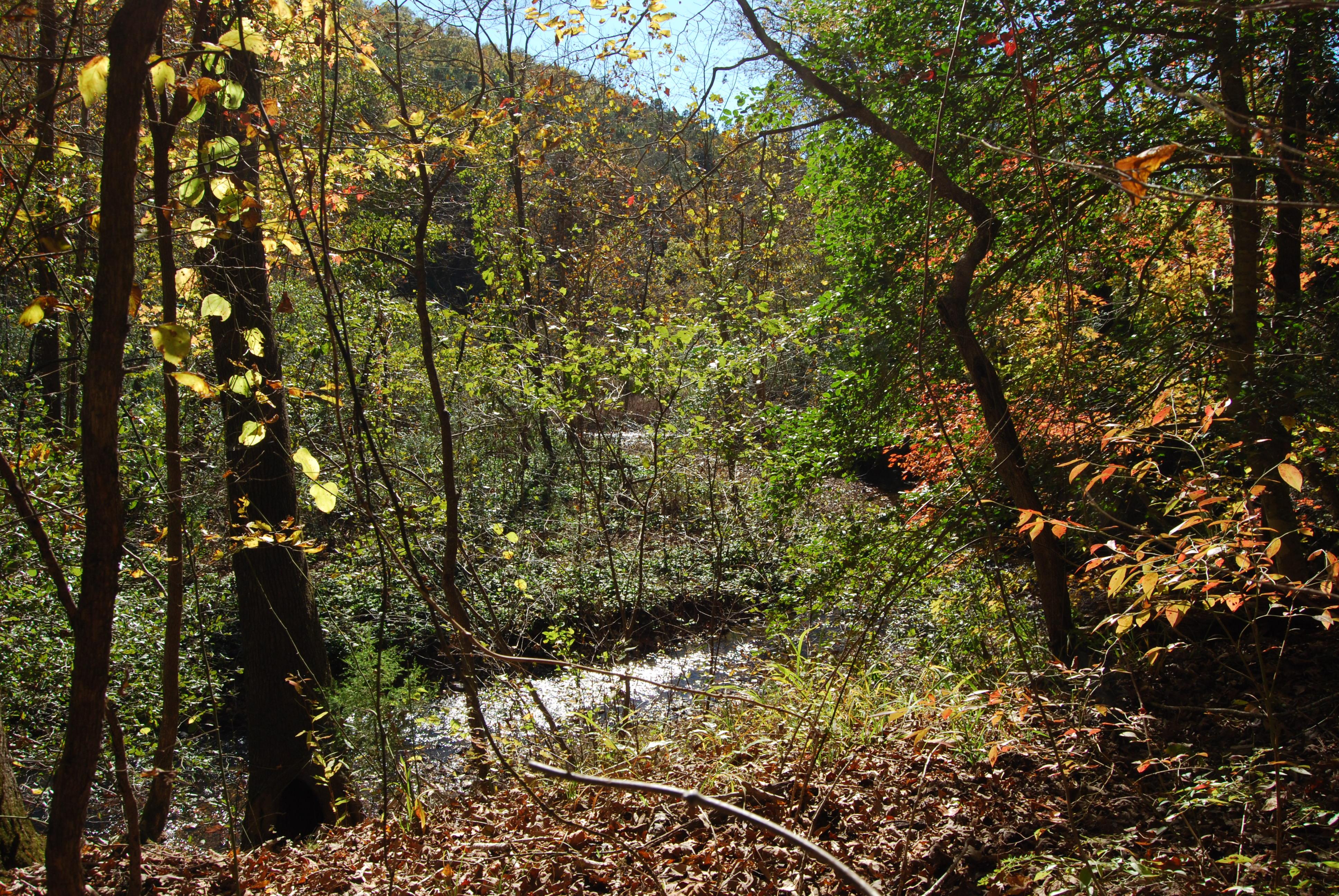 On the Jones Valley Logging Road