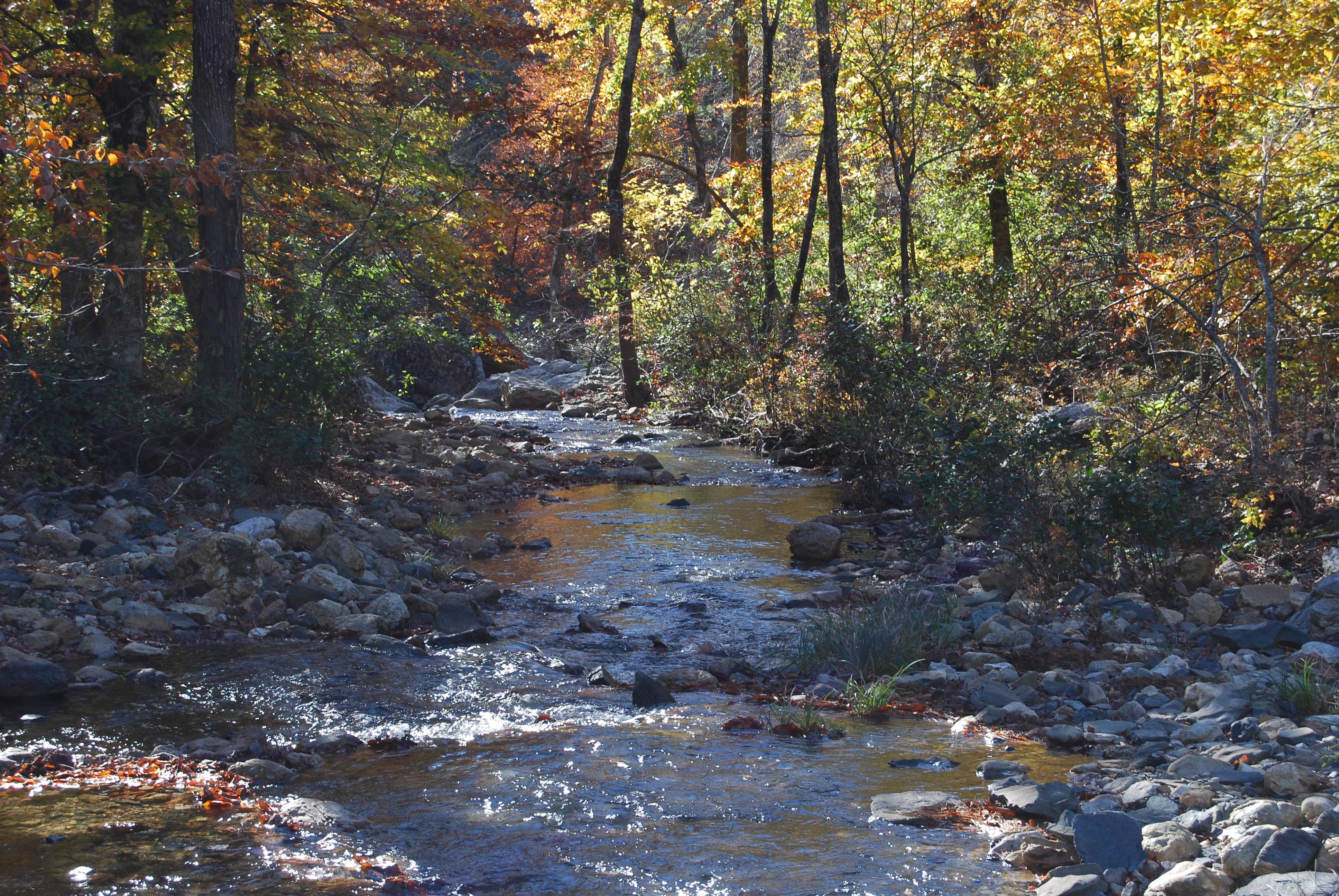 Between Albert Pike Rec Area enroute Little Mo Falls