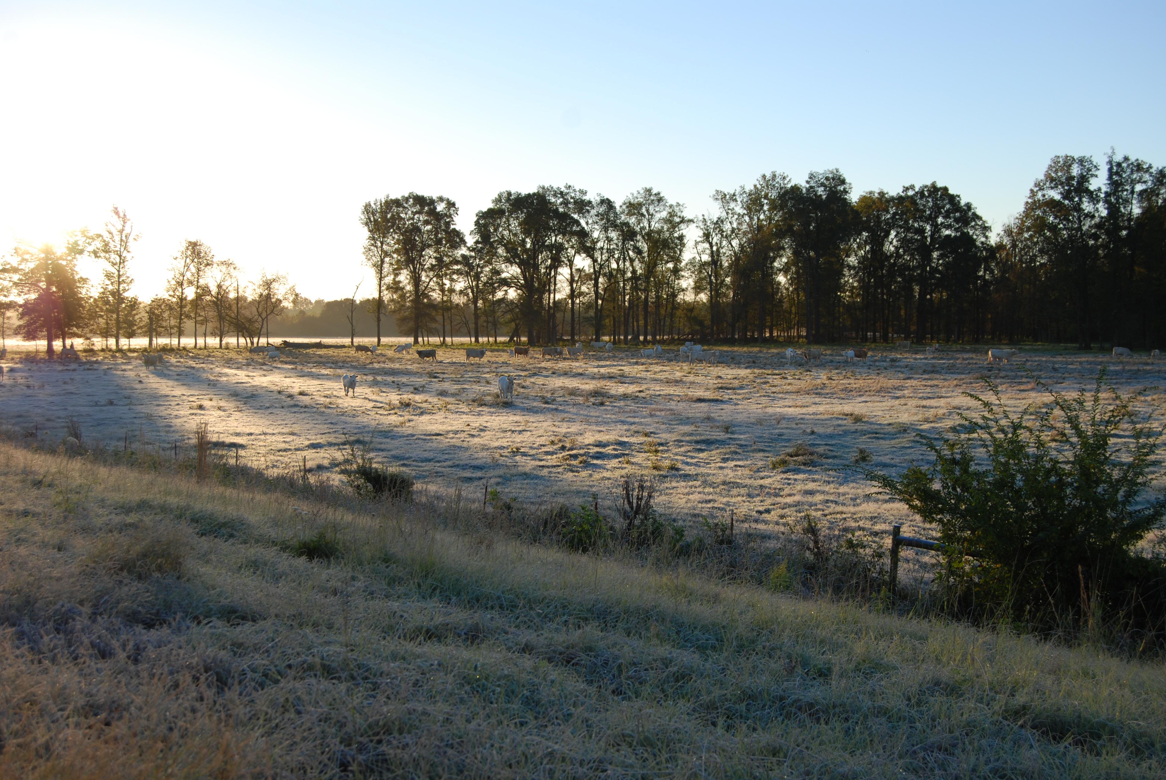 Frosty fall morning in Arkansas. Near DeQueen